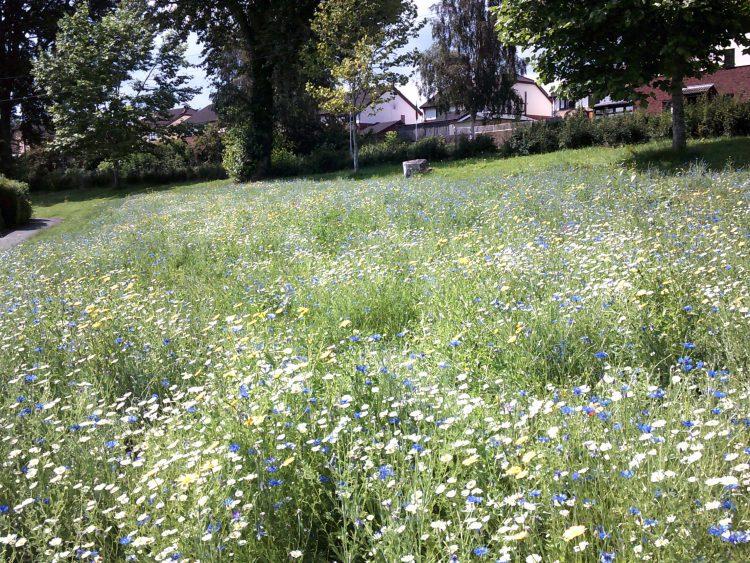 Novus in Wrexham create a Wild Flower Meadow